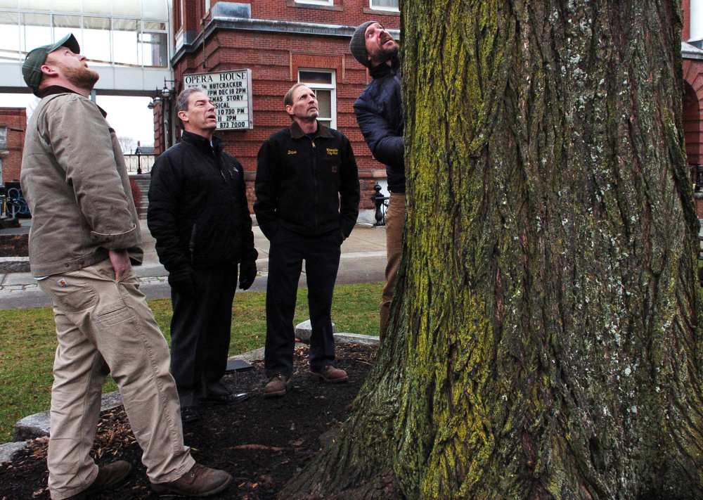 Matt Skehan, director of Waterville parks and recreation, right, examines the bark of the old elm tree in Castonquay Square as Noah Tucker of Bartlett Tree Experts, left, Waterville City Manager Michael Roy and Dave Higgins observe on Wednesday.