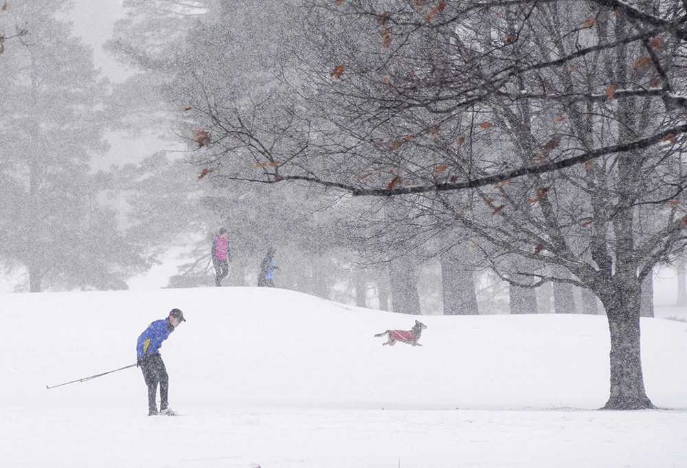 A cross-country skier is among the people and pets enjoy the snow at the Taconic Golf Club in Williamstown, Mass., during a storm on Sunday. <em>Gillian Jones/The Berkshire Eagle via AP</em>