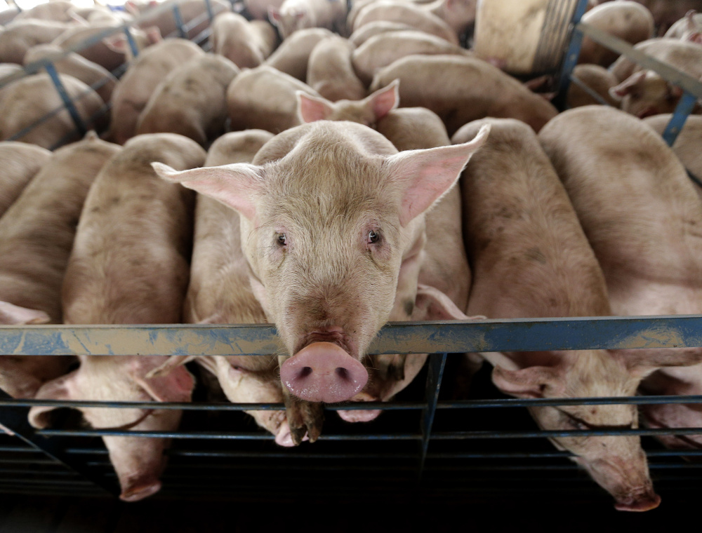 Large-scale farming opertions such as the pork producers in the Midwest have pushed for changes – often successfully – that would make it harder for states to further regulate how they raise animals for slaughter.
