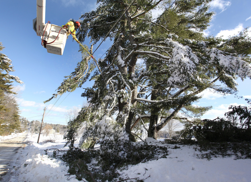 Don Libby of Lucas Tree Experts removes a giant pine tree limb from wires along Wood Road in Gorham on Friday.