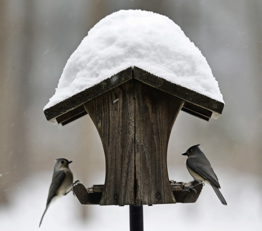 Birds perch on a feeder as snow accumulates Saturday near Hillsborough, N.C. Some of the South's biggest cities avoided the worst of the storm, however.