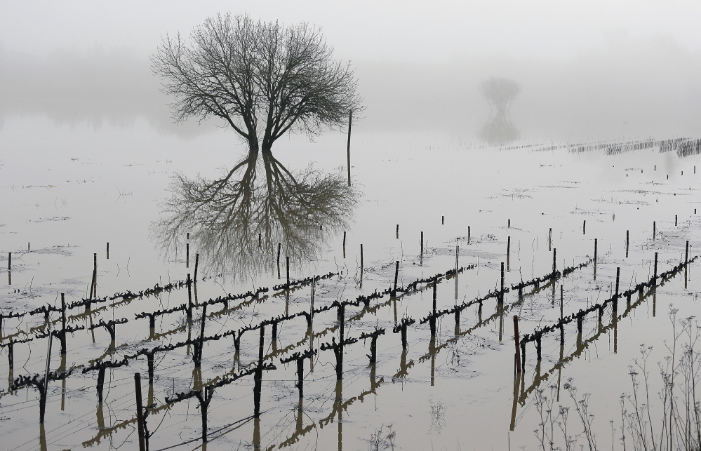 A storm system called the 'pineapple express' drew moisture from as far as Hawaii to inundate vineyards in the Russian River Valley and could dump 4-8 feet of snow in the Sierra Nevada.