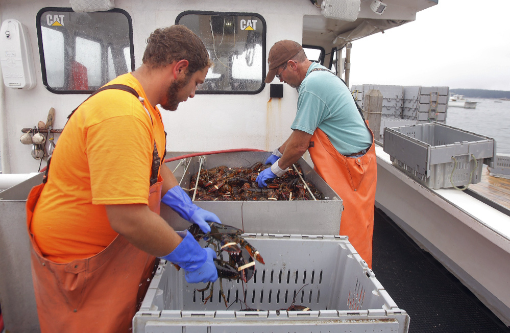 Vincent Barbato, left, and Francis Hardy offload a catch at Greenhead Lobster in Stonington in September.