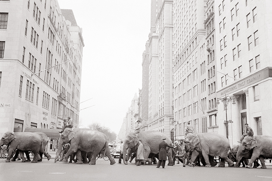 A policeman directs a parade of elephants across the busy intersection of Fifth Avenue and 57th Street in New York in March 1955. The parade heralded the arrival of the Ringling Bros. and Barnum & Bailey Circus for the season.