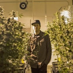 "Brian Lade, president of Smokey Point Productions,  in Arlington, Washington, says, ""If you want to provide cannabis to your people, you've got to adapt or die."""