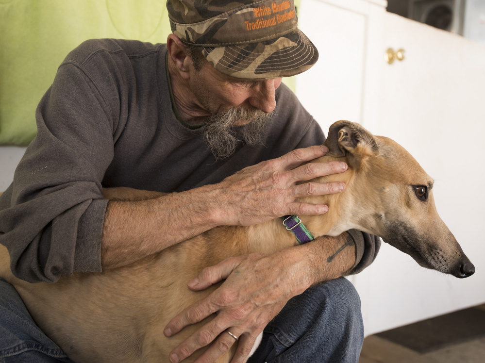 Bill Black, a volunteer at the Maine Greyhound Placement Service, comforts a greyhound named Sandy on Monday at the kennel in Augusta.