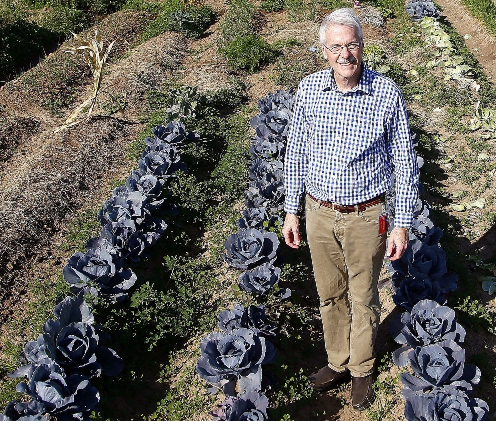 Tom Waldeck, president and CEO of Keep Phoenix Beautiful, stands among the growing crops at a sprawling urban garden on a vacant lot in Phoenix last Tuesday.
