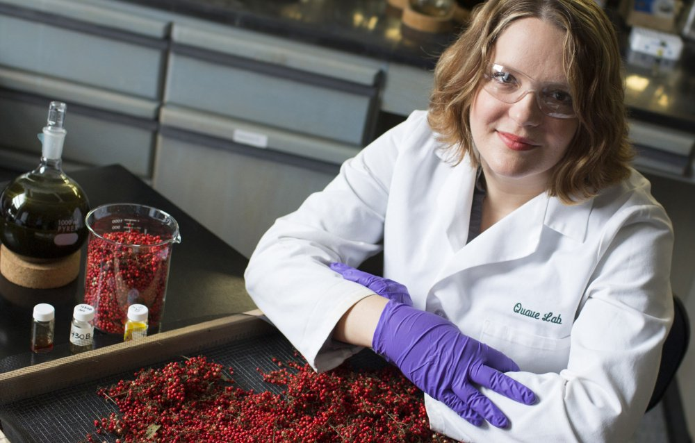Cassandra Quave, an ethnobotanist at Emory University, works in her lab with berries from the Brazilian peppertree. Quave studies how indigenous people use plants in healing practices.