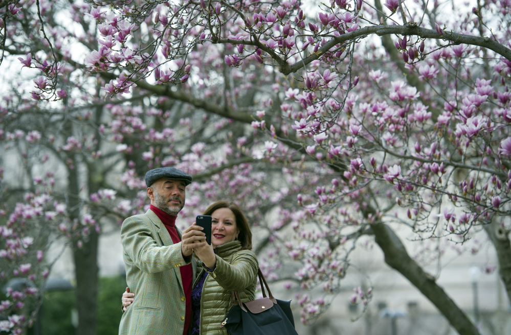 Fidelio Desbradel and his wife Leonor Desbradel, of the Dominican Republic, take a selfie in front of a Tulip Magnolia tree in Washington, Tuesday, Feb. 28, 2017. Crocuses, cherry trees, magnolia trees are blooming several weeks early because of an unusually warm February. Some climate experts say it looks like, because of an assist from global warming, spring has sprung what may be record early this year in about half the nation. (AP Photo