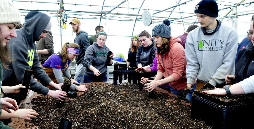 Unity College students fill pods with soil Tuesday for some of the 1,000 American chestnut tree seedlings to be planted.