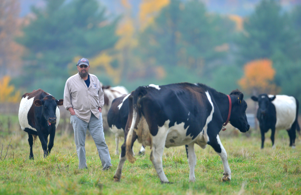 Steve Russell, a Winslow councilor and member of the newly formed agriculture commission, stands among his cows in October. Russell is one of two Winslow applicants seeking relief of their annual assessed taxes in exchange for committing to agricultural conservation. Winslow is the first to pilot the program passed by the Legislature.