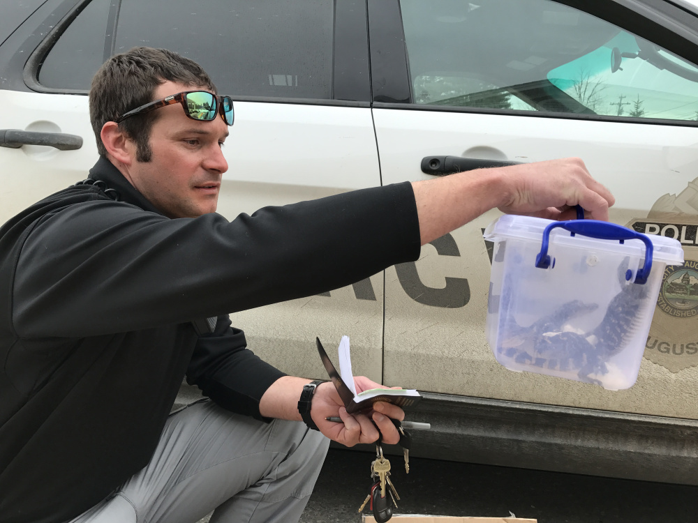 Animal Control Officer Francois Roodman holds a case of baby alligators Tuesday at the bus station in Augusta.