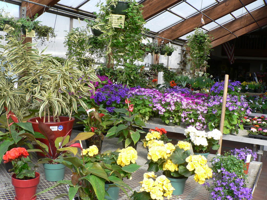 New Flower Show To Provide Taste Of Spring Keep Me Current