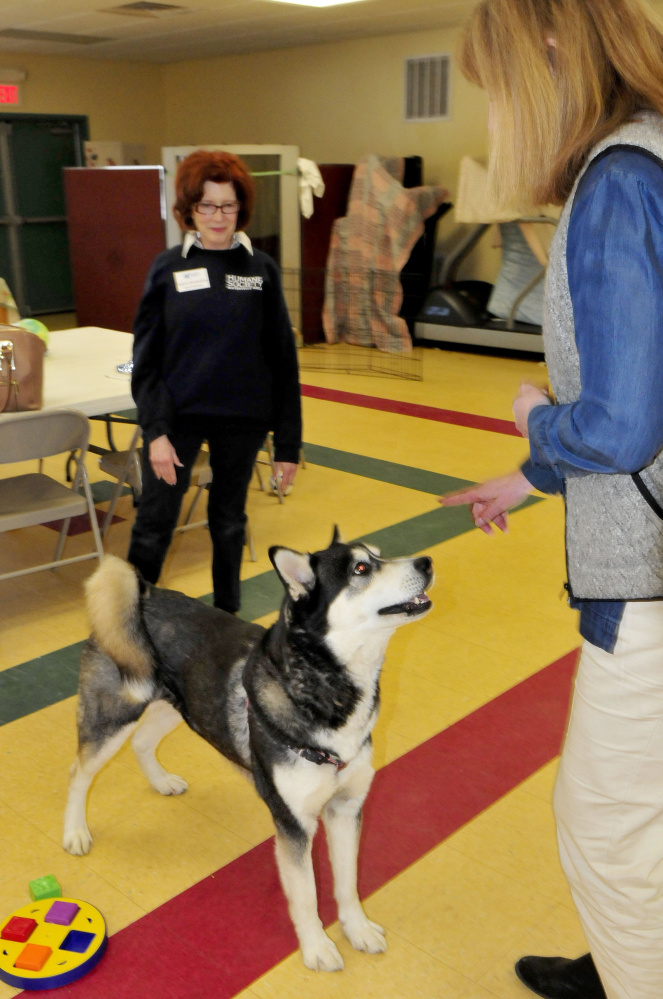 Dakota becomes the center of attention March 30 between Waterville Area Humane Society board member Joann Brizendine, left, and Director Lisa Smith at the Waterville facility. Dakota's fate is in limbo now that a court-ordered euthanization of the dog has been appealed.