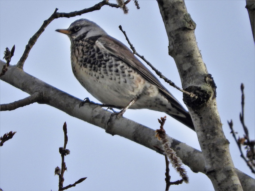 Birdwatchers Abuzz At 2 Rare Sightings In 3 Days