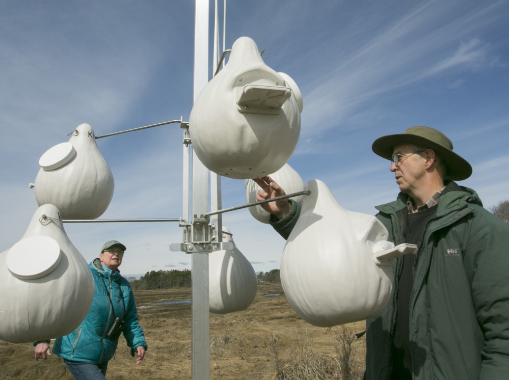 Kathy Donahue, left, and Andrew Aldrich look over the arrangement of new purple martin houses that were installed in a Kennebunk marsh on April 13 as a joint effort between York County Audubon and the Kennebunk Land Trust.