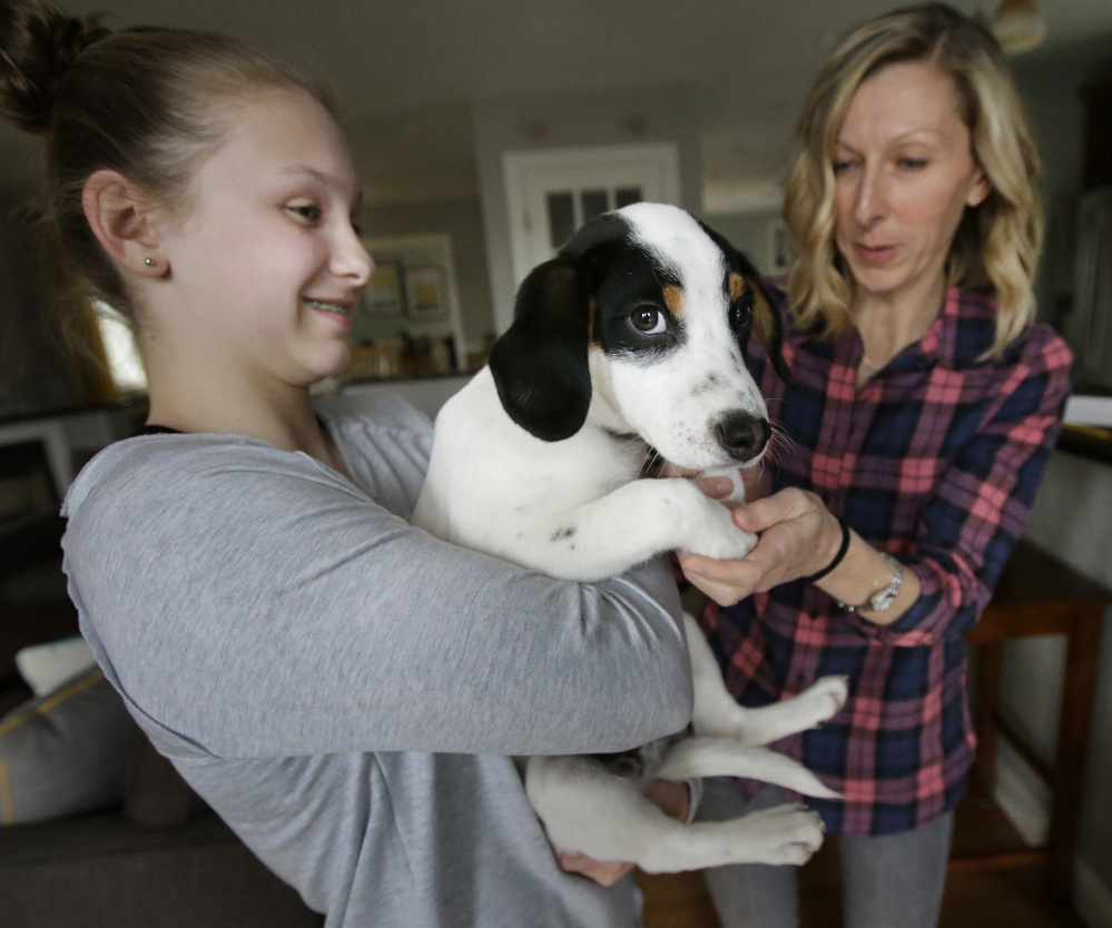 "Morgan Fredette, 13, left, holds the family dog, Roscoe, as her mother, Kate, looks on at their home in Waltham, Mass. The family found looking for a dog to be ""confusing"" before they used the online service How I Met My Dog."