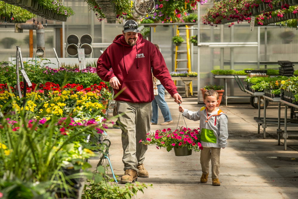 Cain Knowlton, left, of Greene, helps his son Walker, 3, carry a large hanging basket of petunias to their cart at Longfellow's Greenhouse in Manchester on Sunday.