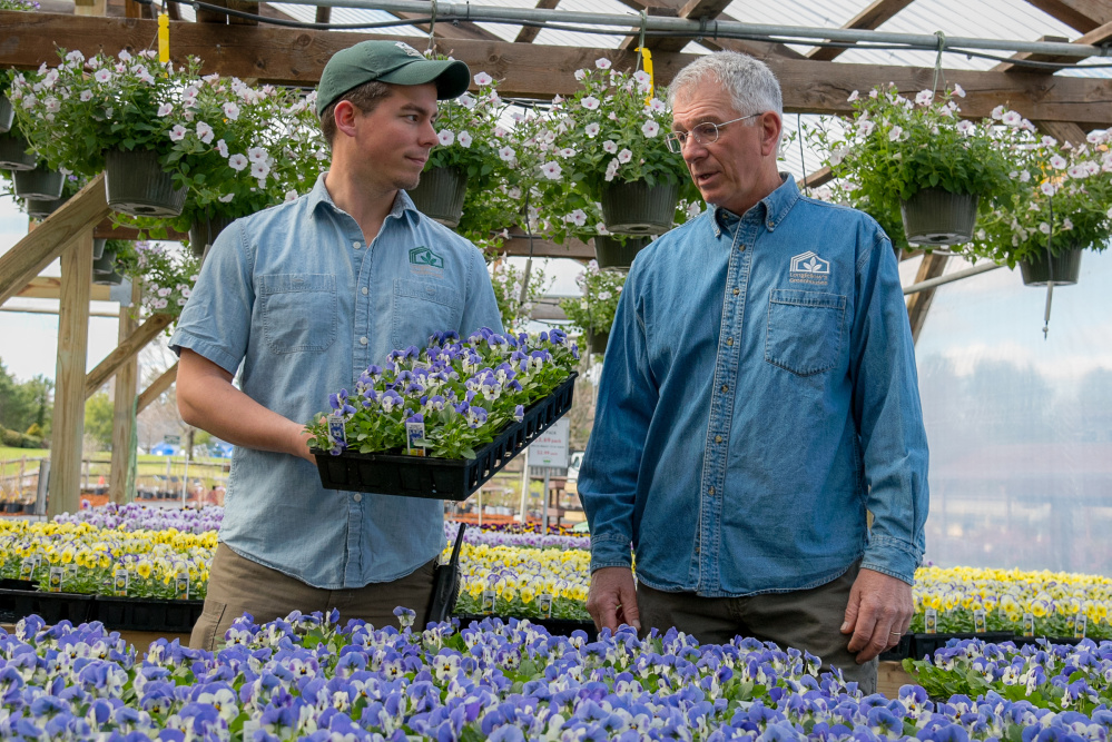 Will Longfellow, left, holds a tray of pansies as his father, Scott Longfellow, owner of Longfellows Greenhouse, looks on Sunday. Will has joined his father in the family greenhouse business started in Manchester 40 years ago.