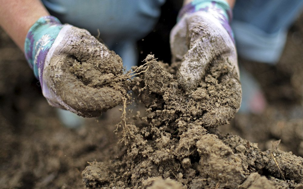 Marisa Tobey breaks up a clump of moist dirt while weeding her garden in Freeport last week.