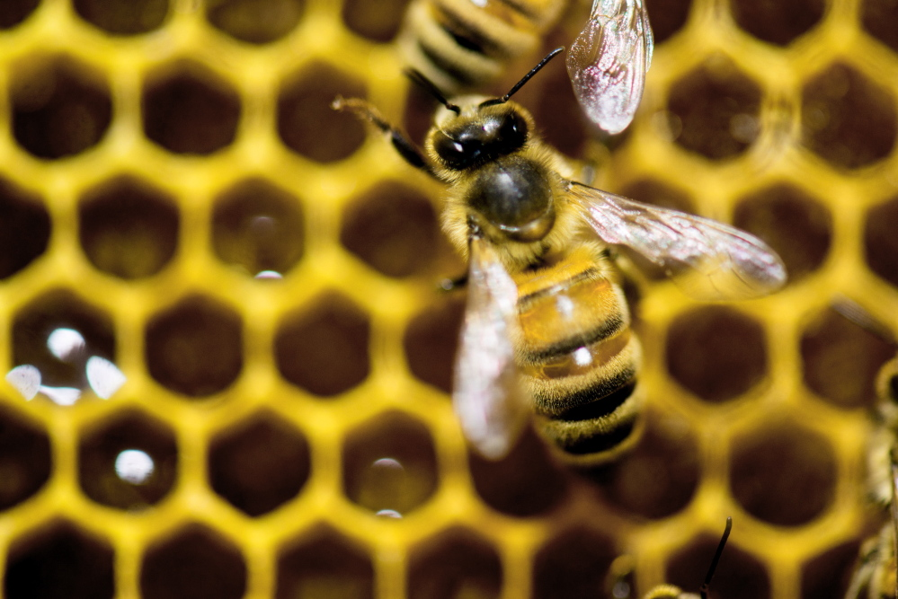 The loss of pollinators such as bees has emerged as a major environmental cause in recent years.