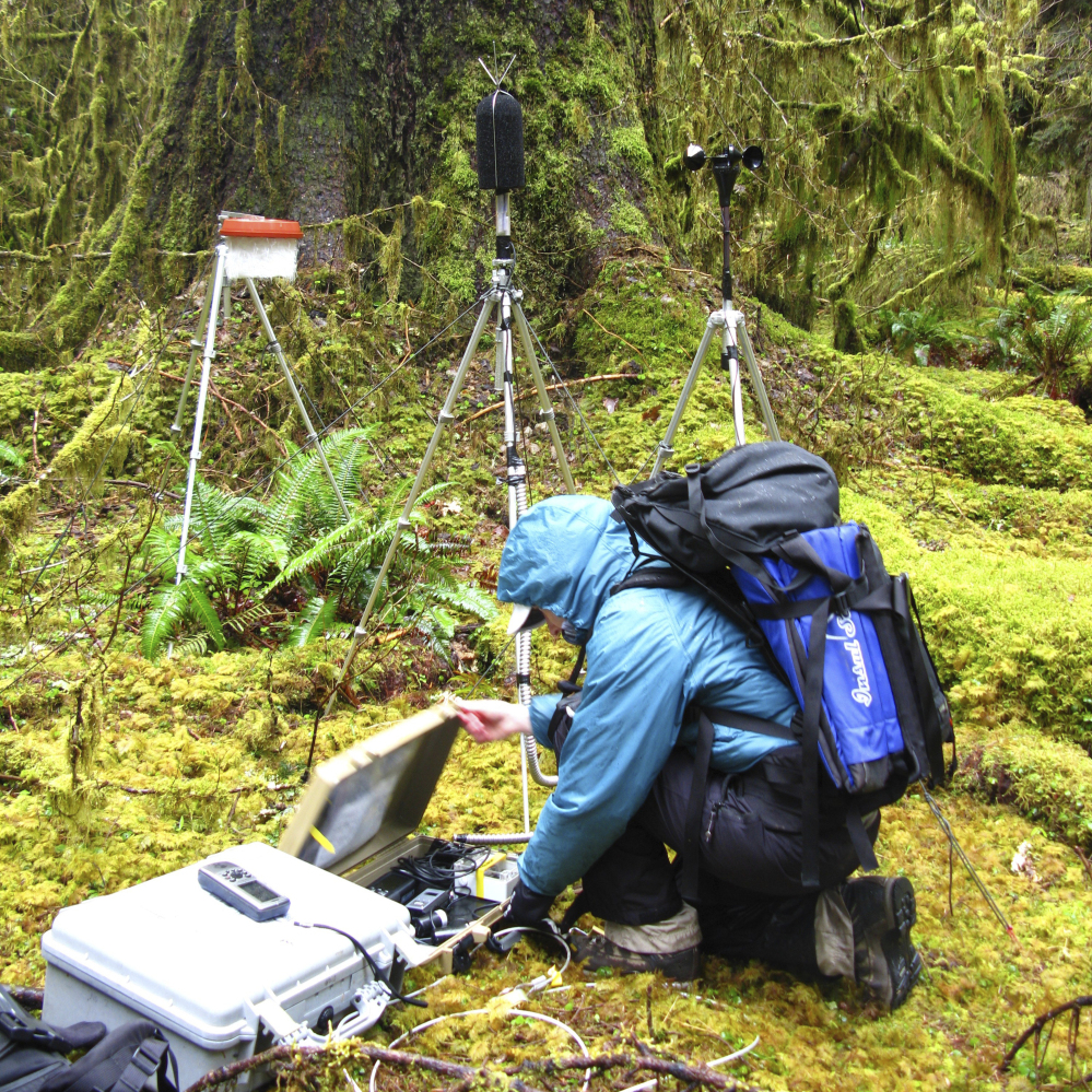 A National Park Service staffer sets up an acoustic recording station in the temperate old-growth Hoh rainforest of Olympic National Park in Washington.
