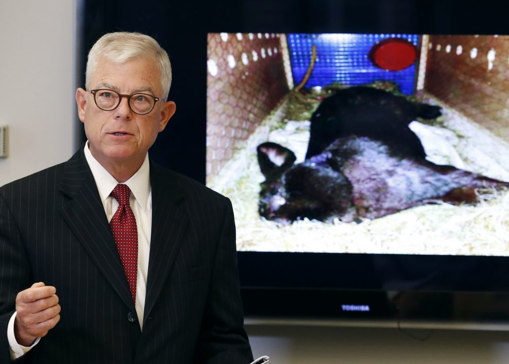 Iowa attorney Guy Cook says the owners want to know more about the death of Simon, a giant rabbit shown at right that died after a flight from the U.K. to Chicago.