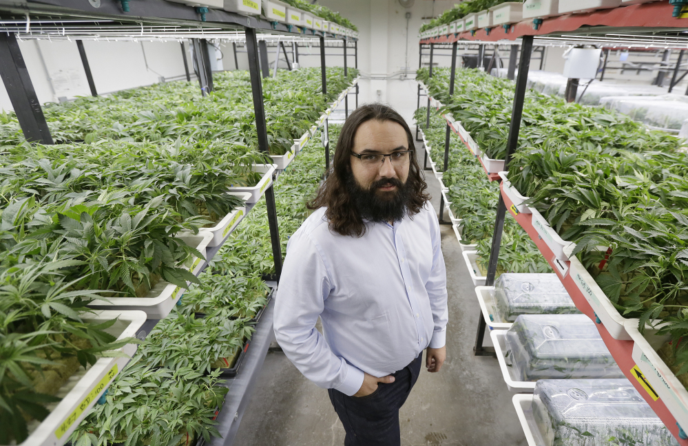 Dan Grace stands in the marijuana production facility of the Dark Heart Nursery in Oakland, Calif. California voters legalized recreational marijuana in November.