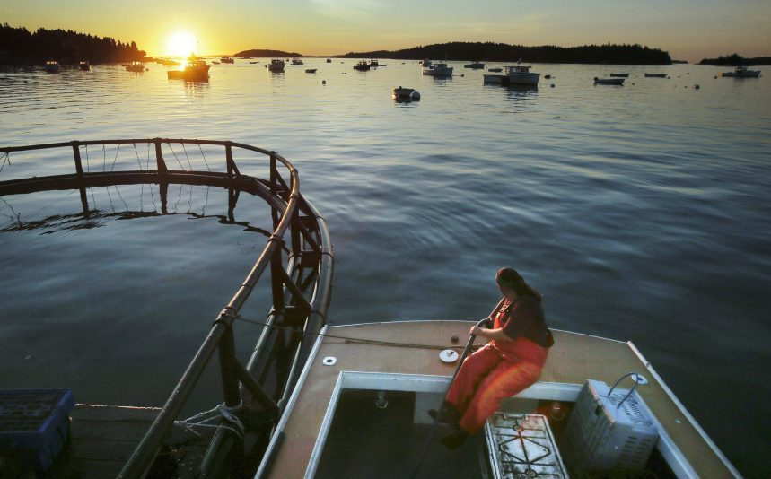 The best lobstering used to be in Casco Bay in the 1980s but it has shifted  east and is now considered to be in and around Stonington because of rising ocean temperatures.