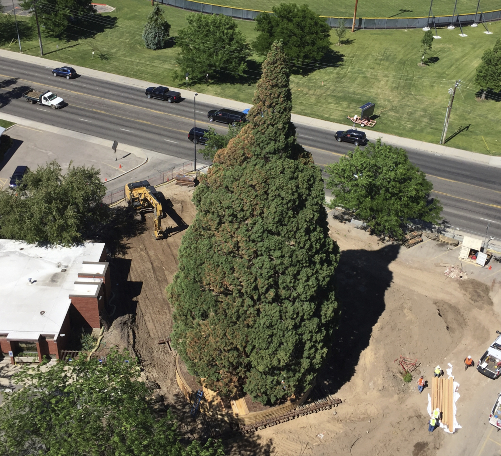 An aerial view shows heavy machinery used by workers as they built a structure to contain the rootball so they can move the 100-foot sequoia tree in Boise, Idaho, Thursday.