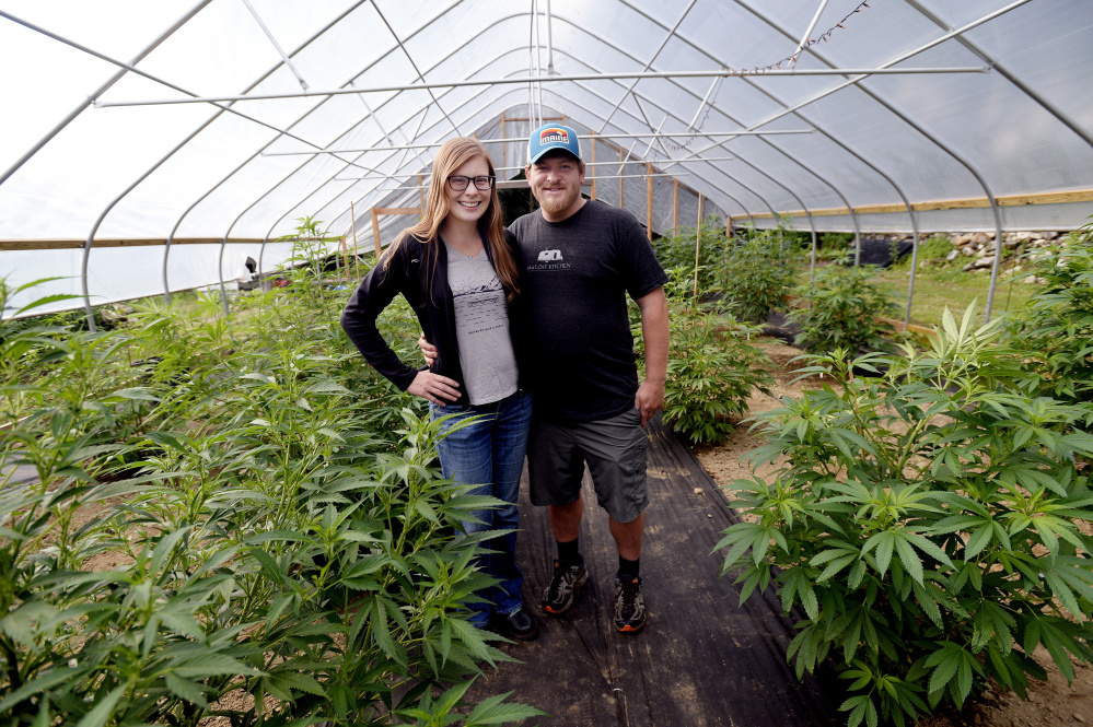 Emily Isler and Chad Crandall of Tree Tap Extracts in their greenhouse in Jay. They provide marijuana-infused maple sugar candies to patients who prefer taking cannabis orally to smoking it. Staff photos by Shawn Patrick Ouellette