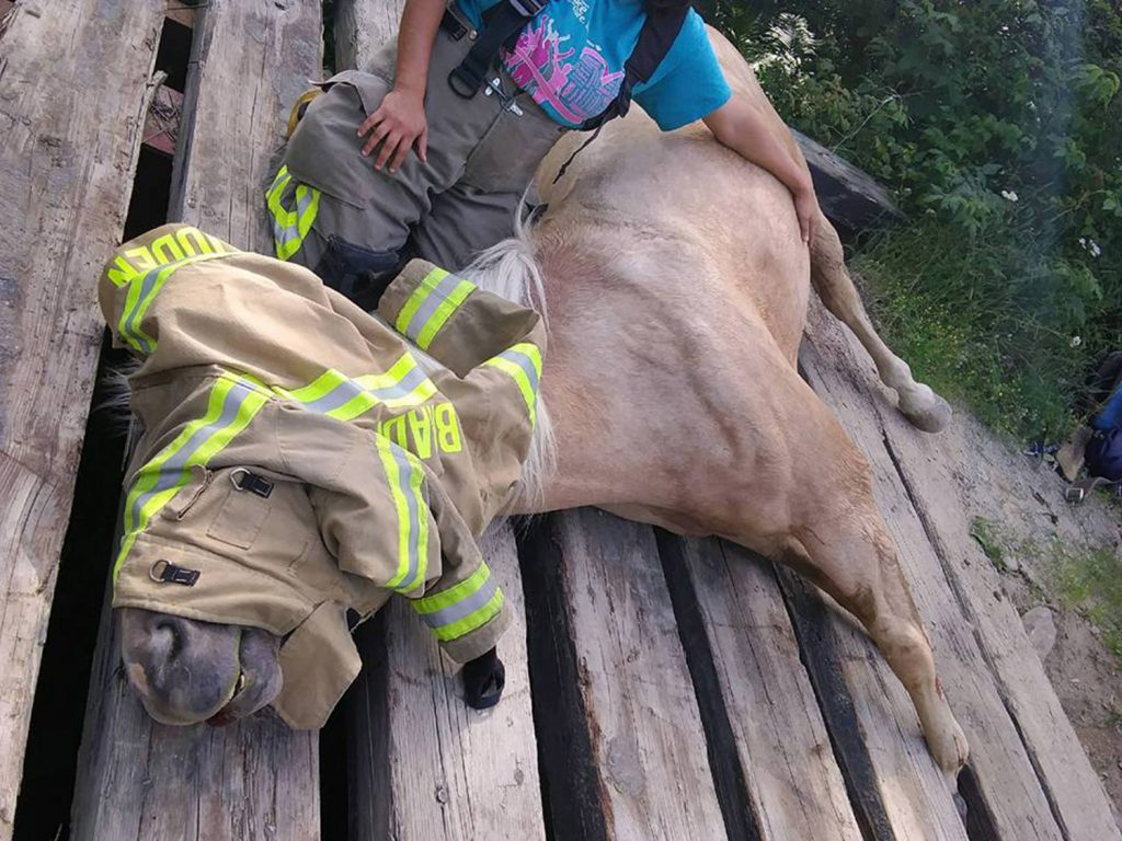 Yukon is tended to while rescuers devise a plan to free its hooves from a bridge on Wilder Davis Road in Hudson, a small town in Penobscot County, on Sunday.