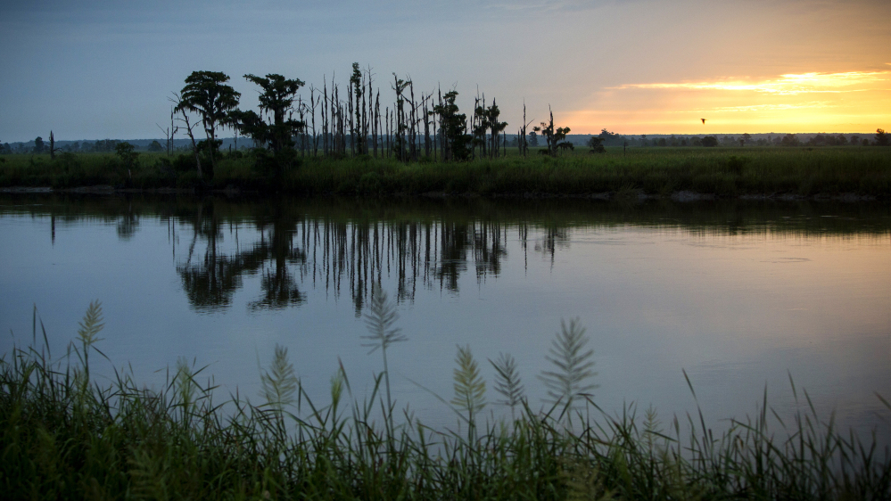 """The sun rises on a """"ghost forest"""" near the Savannah River in Port Wentworth, Ga. Dead trees in what used to be thriving freshwater coastal environments are called """"ghost forests"""" by researchers."""