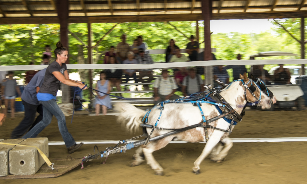 Mini-horses pull heavy blocks during a competition Saturday at the Monmouth Fair.