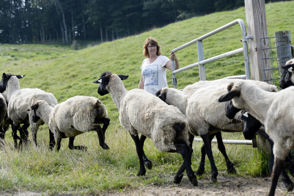Lisa Webster holds a gate as her sheep go from one pasture to another at North Star Sheep Farm at Collyer Brook Farm in Gray. Some groups accuse large agriculture organizations such as the American Farm Bureau of stoking fear from an Obama-era interpretation of the Clean Water Act in 2015. Staff photo by Shawn Patrick Ouellette