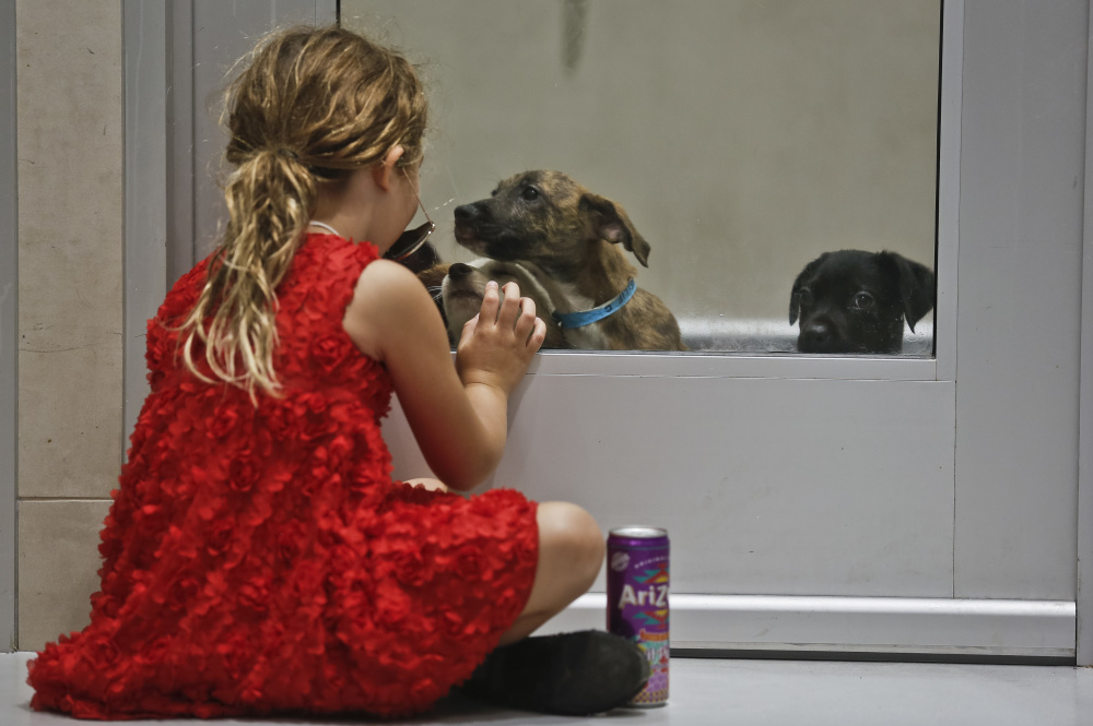 Alba Crivello, 7, separated by a glass door, plays with puppies at the Animal Haven animal shelter Thursday in New York. The puppies are among new arrivals from Puerto Rico.