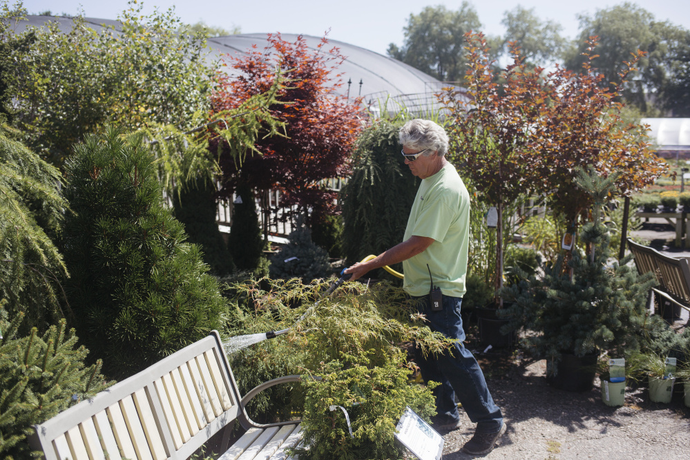 Bill Chase waters plants Monday at Estabrook's Garden Center and Nursery in Yarmouth. Chase spends a couple of hours watering all of the plants in the morning, even if it rained the previous night.