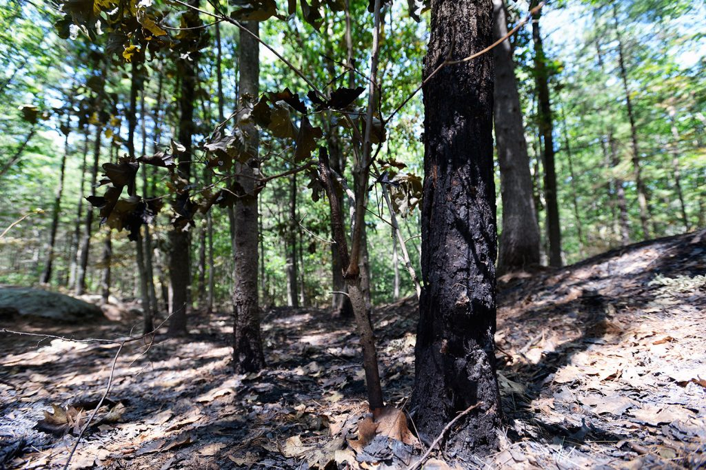 A charred tree in Clifford Park in Biddeford on Thursday is evidence of the recent fires that have prompted officials to step up inspections.