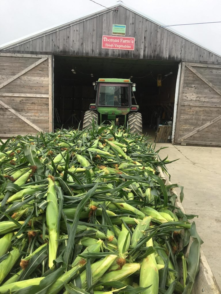 Thomas Farms in Corinth supplies sweet corn and a range of other vegetables to 18 Hannaford stores in Maine.