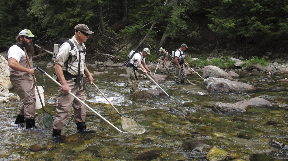 Fisheries experts look for landlocked Atlantic salmon in the Huntington River in Huntington, Vt., last week. About 150 years after Atlantic salmon were pushed out of the Lake Champlain basin, the fish are again naturally reproducing in rivers in Vermont and New York.
