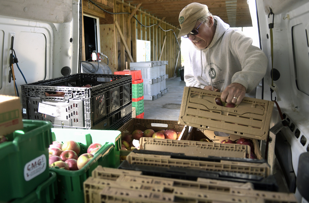 Steve Knight packs apples he gleaned Wednesday from an orchard in Readfield. The produce will be distributed to local food kitchens and food banks.