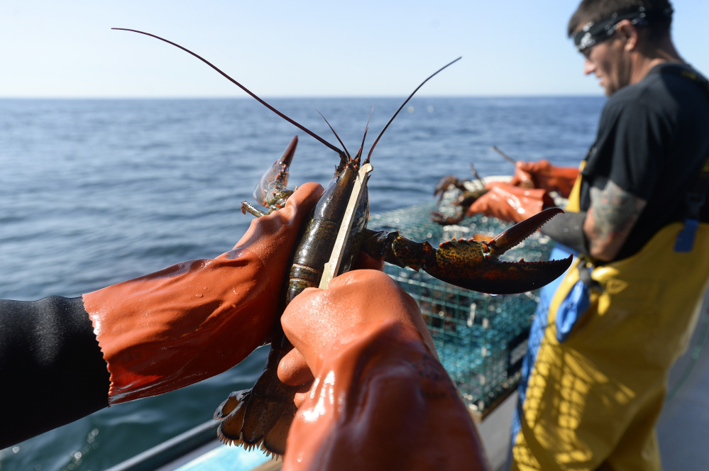 If the Trump administration allows Atlantic oil and gas exploration to move ahead, Maine's $735 million-a-year fishing catch could be disrupted by seismic blasts that are loud enough to be heard underwater up to 2,500 miles away.