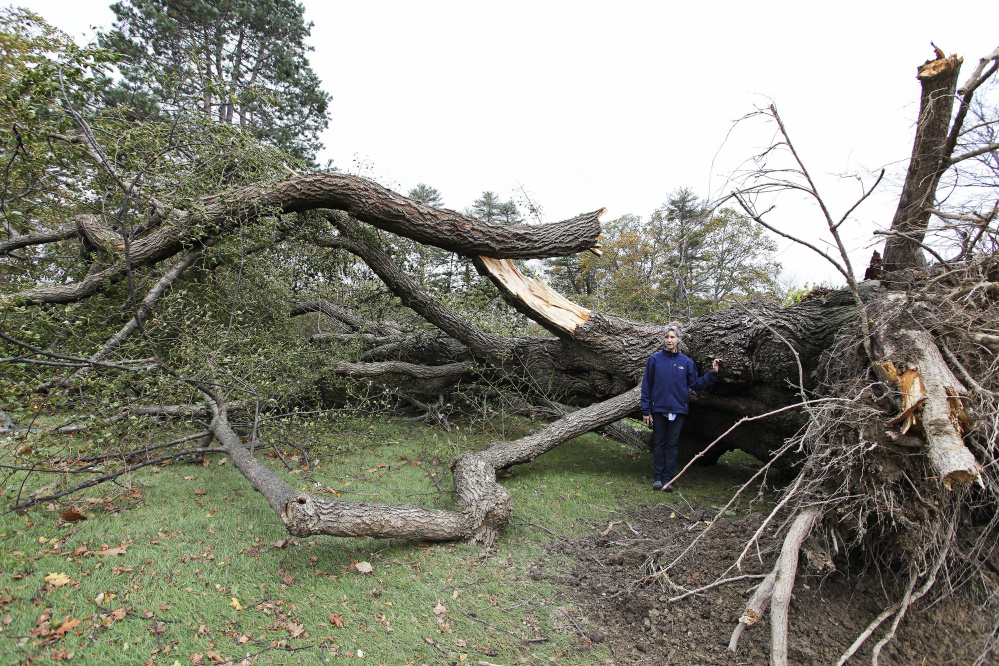 Rose Lacasse, of Harrison, caretaker at 14 Menikoe Point in Falmouth, stands by a littleleaf linden tree toppled in Monday's storm. The tree stood 97 feet tall, had a girth of 8 feet and was estimated to be more than 200 years old, she said.
