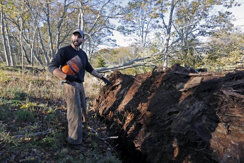 """This is not normal, for so many deciduous trees to rip up from the base,"" says Todd Robbins, who serves as Cape Elizabeth's tree warden and assistant property manager of Ram Island Farm."