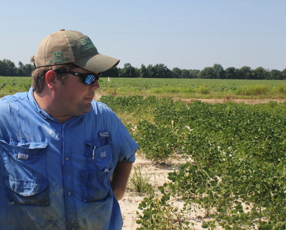 East Arkansas soybean farmer Reed Storey looks at his field in Marvell last summer. He said half of his crop had shown damage from dicamba, an herbicide that has drifted onto unprotected fields and spawned hundreds of complaints from growers.