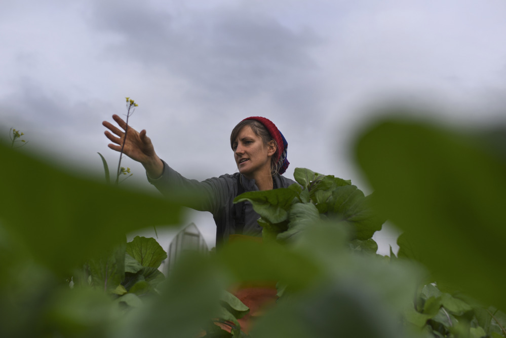 Liz Whitehurst picks greens at Owl's Nest Farm in Upper Marlboro, Md., earlier this month. Whitehurst is the owner and operator of the farm, which sells its produce at a D.C.-area farmers market, to restaurants and through CSA shares.