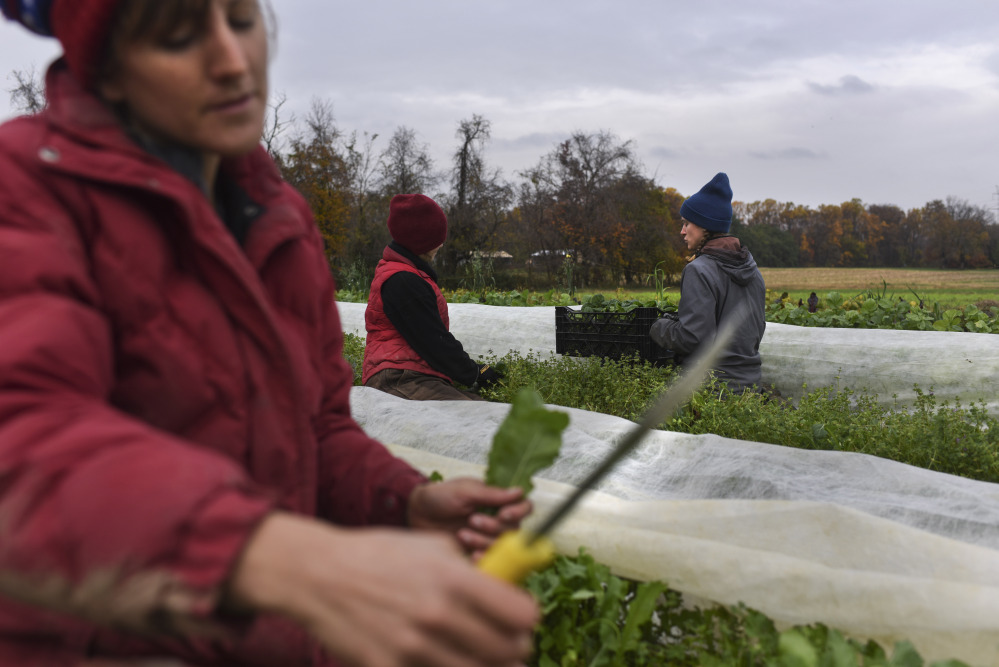 From left, Liz Whitehurst, Rachel Clement and Foster Gettys pick and weigh greens at Owl's Nest Farm in Upper Marlboro, Md.