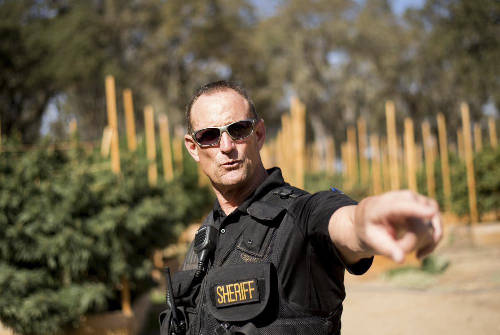 "Calaveras County Sheriff Rick DiBasilio leads a raid on a growing operation late in September. ""I could do this every day if I had the personnel,"" DiBasilio says about the extent of illegal pot farms here."