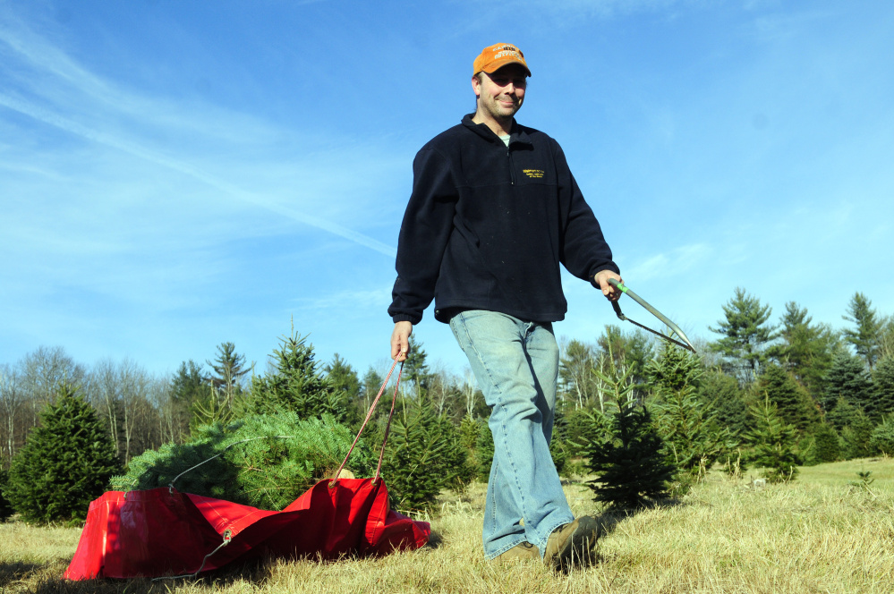 Leigh Stevens, of Livermore Falls, drags a tree he had just cut down back to his car on Tuesday at Moose Hill Tree Farm in Fayette.