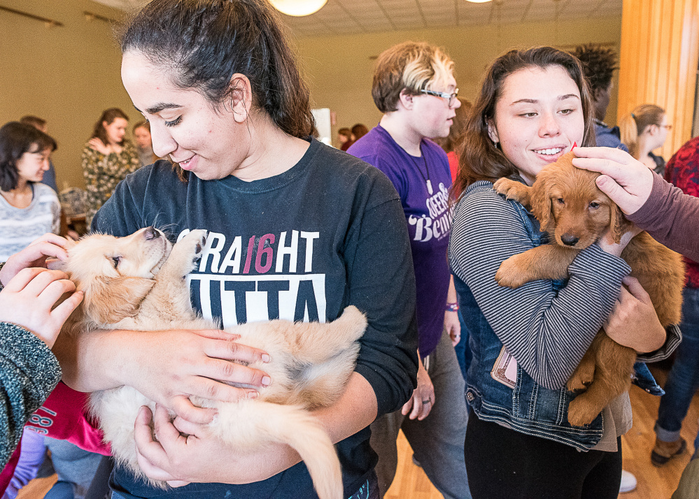A golden retriever puppy helps Jasmine Athamni de-stress before finals recently at the University of Maine at Farmington. A reader says a column criticizing the event did pet therapy a disservice.